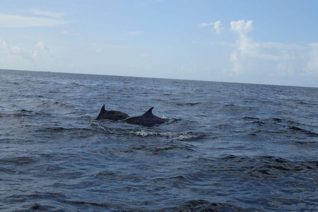 Dolphins Tobago