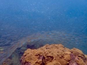 Underwater Shapes Tobago