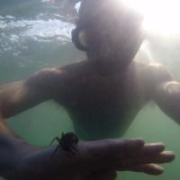 My octepus teacher  - og min danske krabbe-ven
