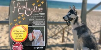 Dogmatic Headcollar