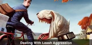 Leash Aggression in Dogs