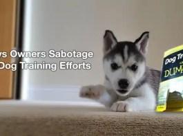 Sabotage Dog Training