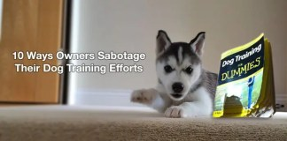 Sabotage Dog Training