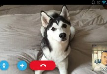 Skype video call with my dog