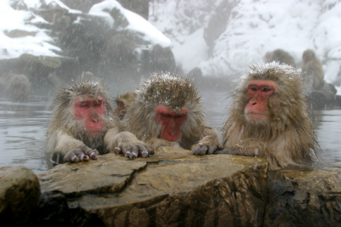 Image result for monkey in the snow pictures