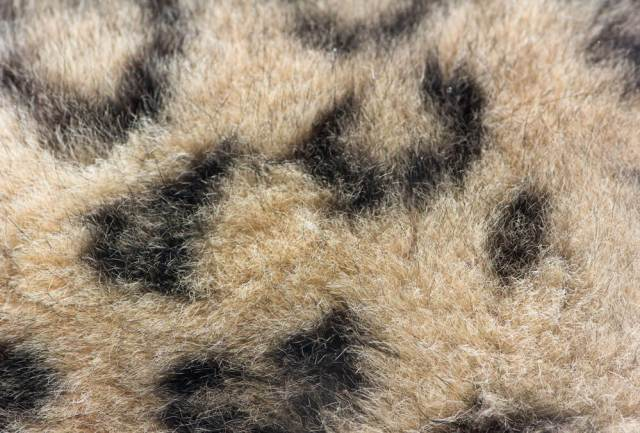 snow-leopard-fur-website
