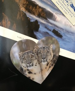 Snow Leopards on the Fridge