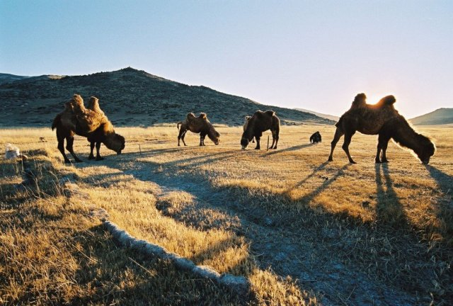 Pastoralism is more than a way of life in the South Gobi - it's essential to this part of the world.