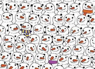 Zoek de panda