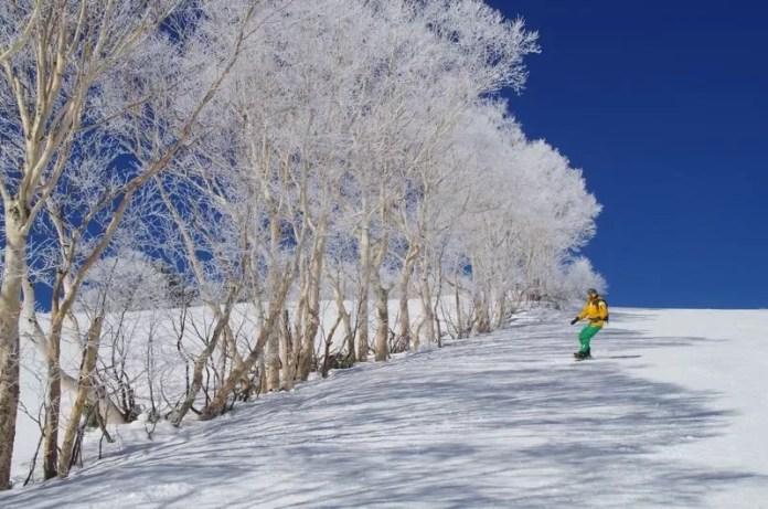 Witte loofbomen op de piste in Shiga Kogen