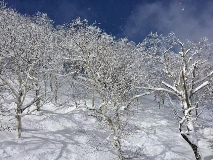 Sneeuwlandschap in Furano