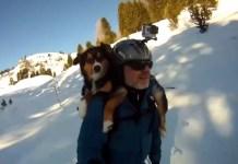 Hond op je rug