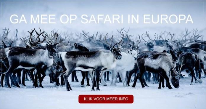 Ga mee op Europese Safari