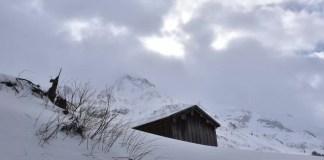 veel verse sneeuw