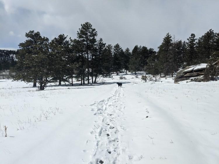 dog on wide open snowy trail