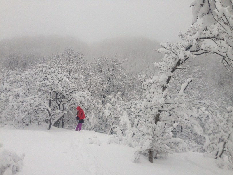 snow covered trees in a snowstorm and woman in background