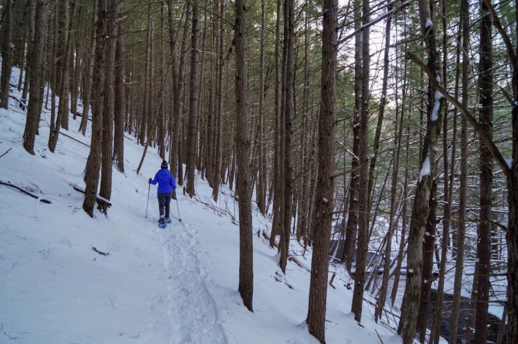 person snowshoeing through trees along Bear Brook Trail in New Hampshire