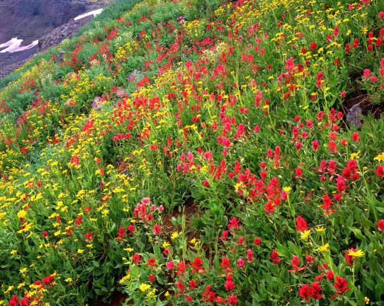 flowers in Flat Tops Wilderness