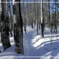The Ultimate Guide to Snowshoeing in Grand County, Colorado