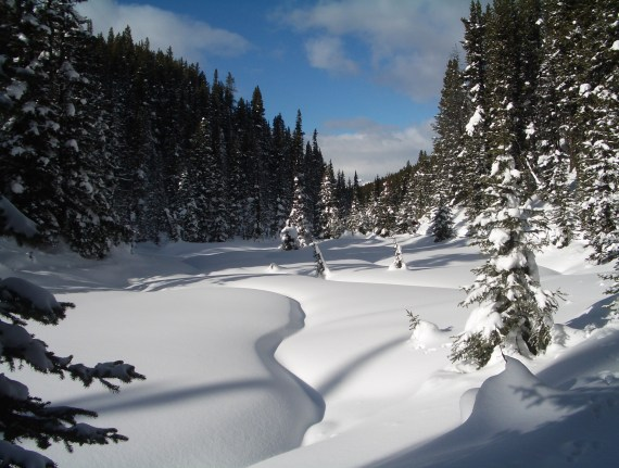 Scenery in Peter Lougheed Provincial Park on the Elk Pass Trail
