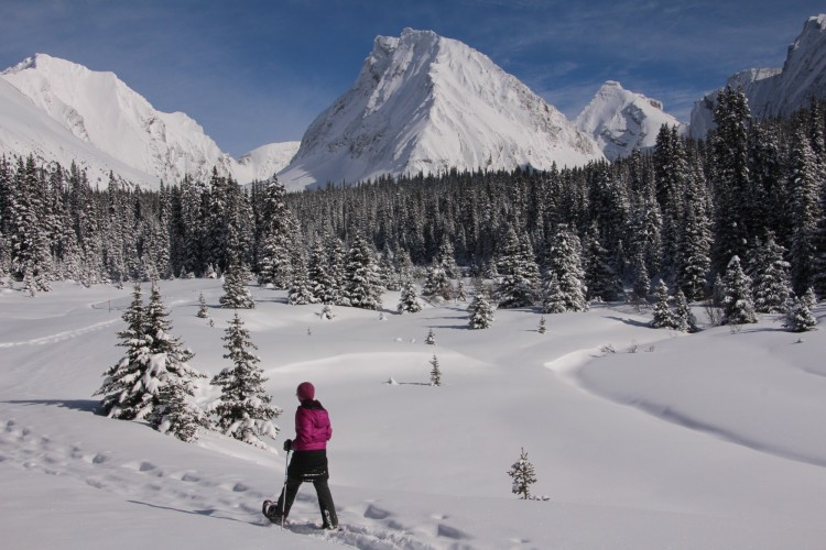 woman walking with snowshoes and poles with trees and Rocky Mountains in background