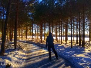 Fancy a skate through an enchanted forest? Jenn Smith Nelson