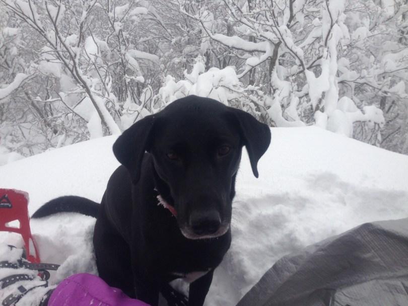 dog in the snow - Goodmacher