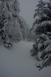 Snow in the Smoky Mountains, Gatlinburg, TN 10/31/12 looking like a candidate to start the snowshoe racing season.