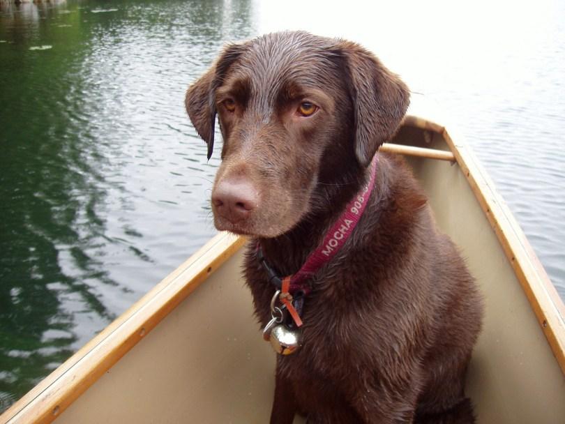 wet dog sitting in a canoe