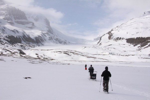 trail of hikers snowshoeing up to the Athabasca Glacier