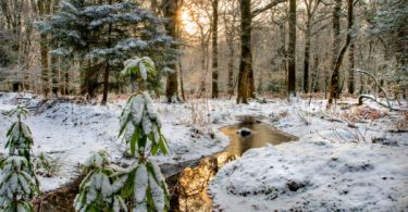 winter in new forest uk