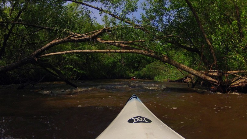 looking ahead at upcoming deadfall in the river