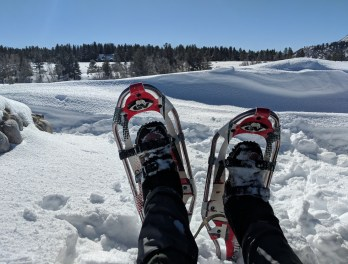 Snowshoe photo relaxing in Chama