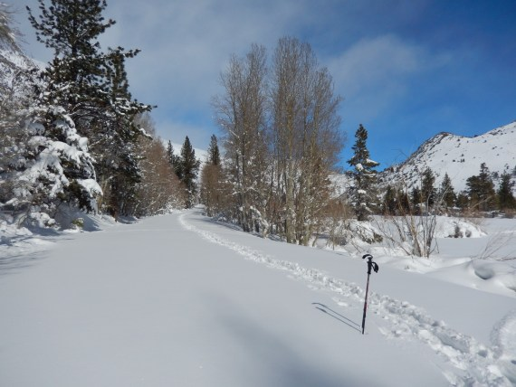 snowshoe tracks with poles on left