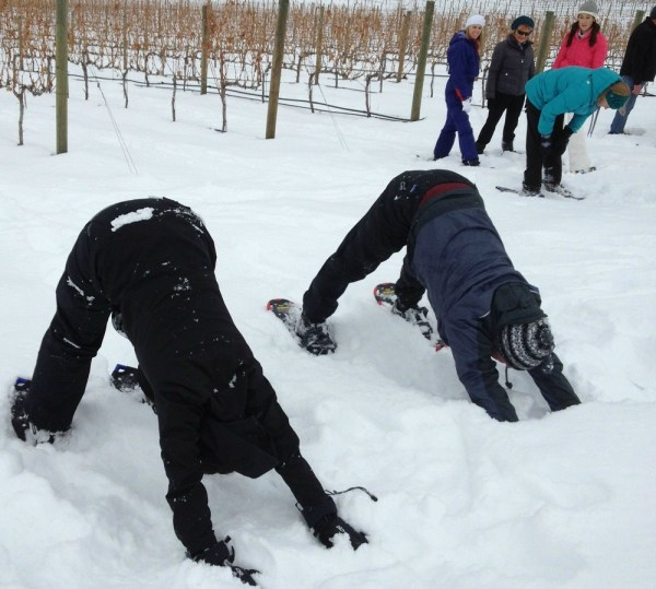 Down Dog in the Vineyard at Tsillan Cellars Snowga