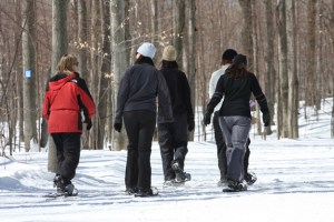 A group of snowshoers sets out into the woods.