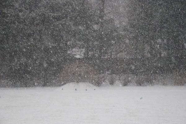 Severe Snowstorm