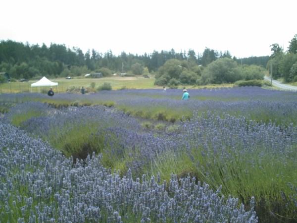 Washington State 2010 081
