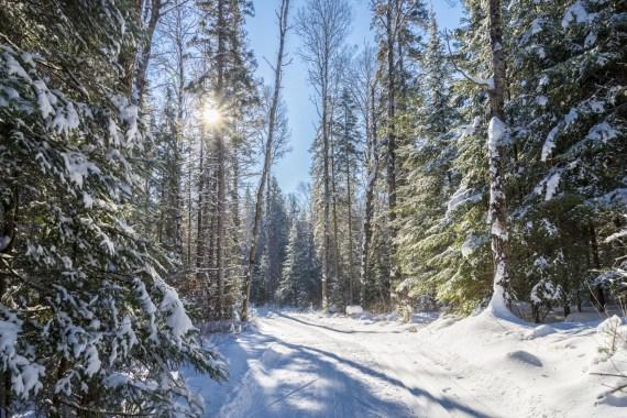 snowshoeing trails Algonquin Park, Ontario