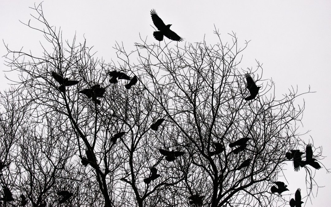 Writing Gothic Fiction: Tips To Craft An Effective Story