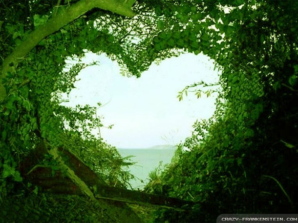 cool-pic-green-heart-leaves-tree-favim_com-794613
