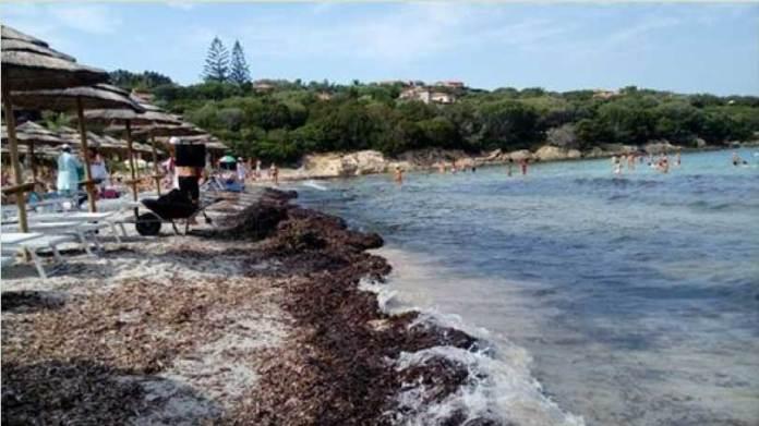 Accumuli di Posidonia oceanica su spiaggia