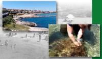 L'alga tossica Ostreopsis ovata, un quadro nazionale dei controlli svolti
