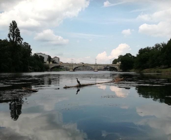 Il fiume Po un grande protagonista nel centro di Torino
