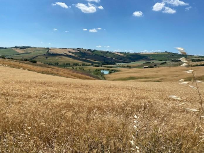 Terre Roveresche: colline E dolcezza infinita