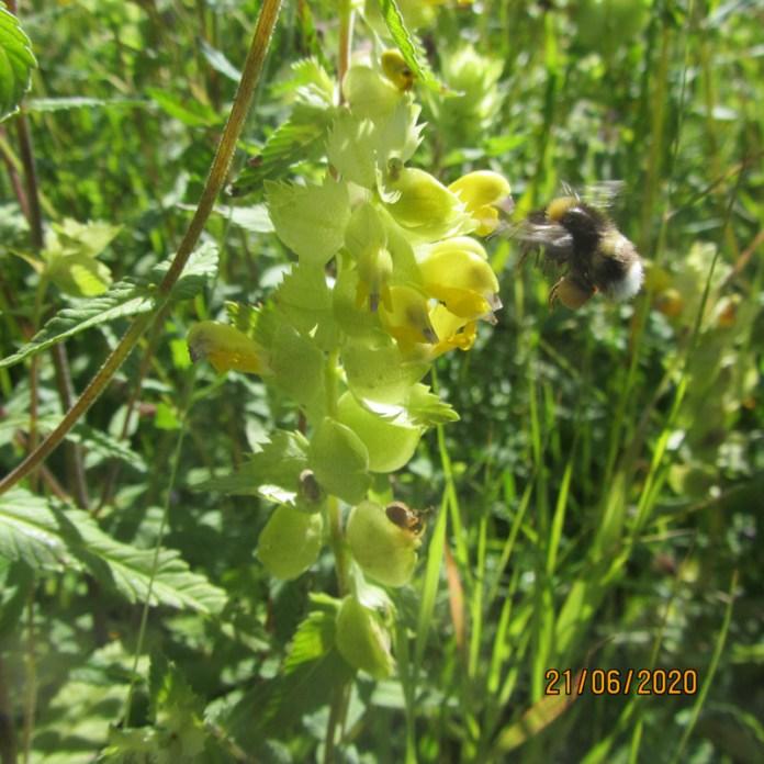 La biodiversità ispira la creatività (foto 2)