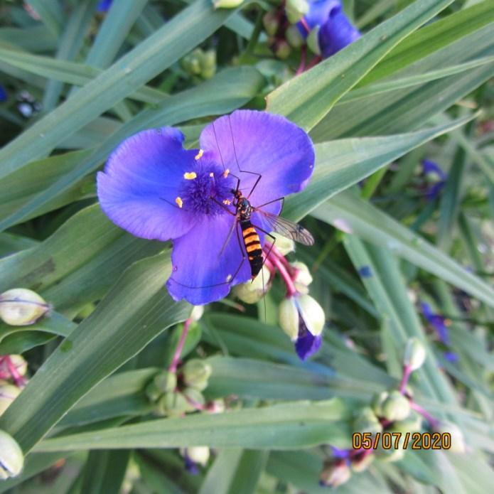 La biodiversità ispira la creatività