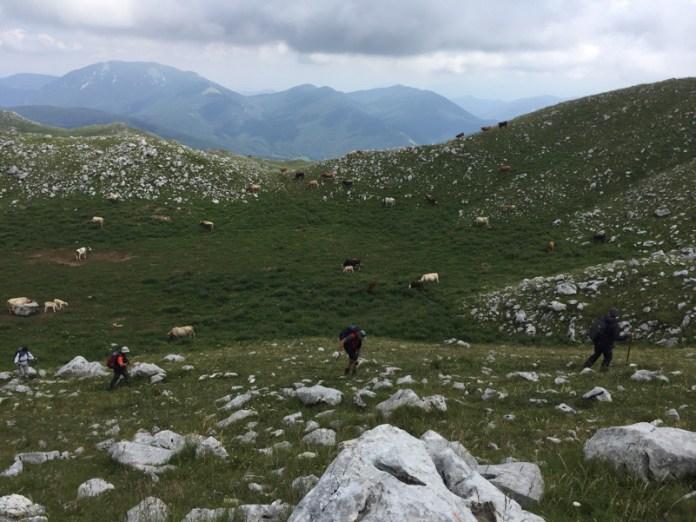 Molise_Parco_Nazionale_Matese_Biodiversità_Monte La Gallinola_San Polo Matese-CB