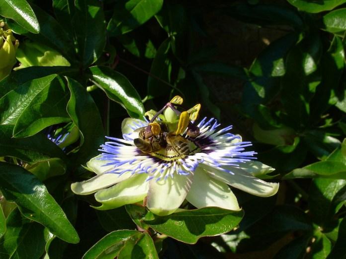 Rispettiamo le api