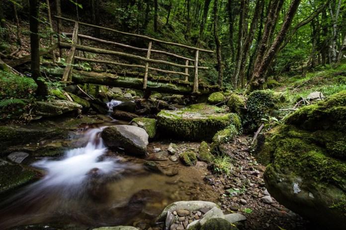 Ponticino nella Riserva Naturale Acquerino Cantagallo